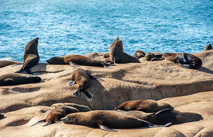 En Cabo Polonio vas a conocer a los famosos residentes, los leones marinos